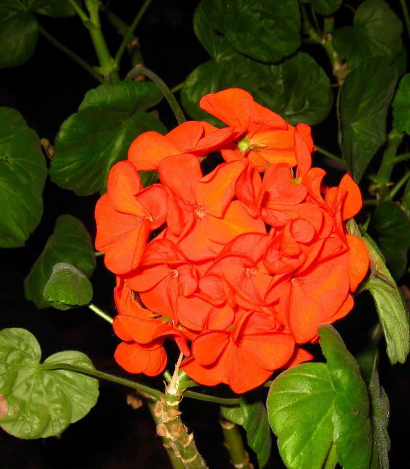 Домашние цветы фото и названия